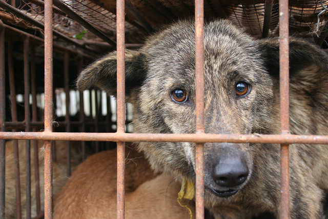 Finally Better Times For Dogs In China